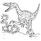 Afbeelding Kip Kleurplaat Kleurplaat Dinosaurus 3752